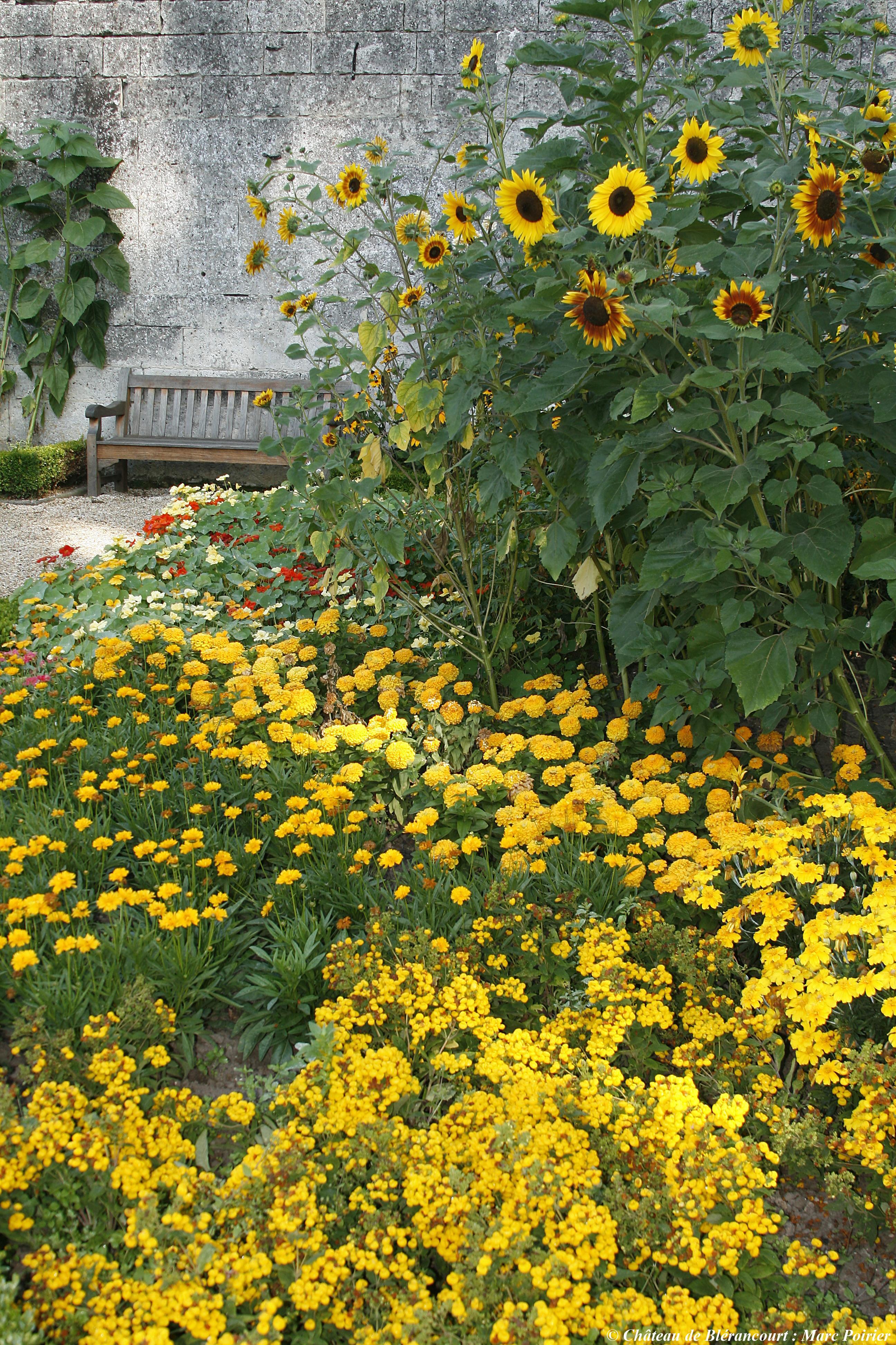 Jardin jaune du Musée franco-américain du château de Blérancourtcourt