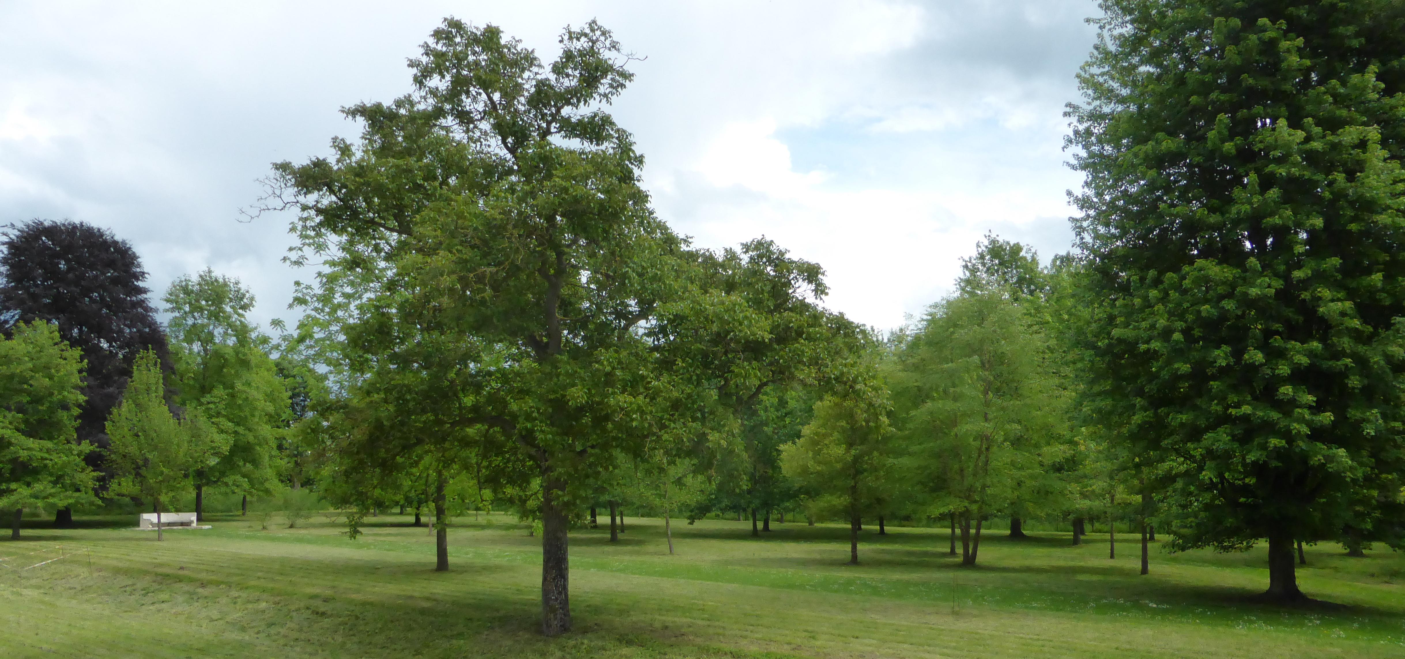 Arboretum du Musée franco-américain du château de Blérancourt